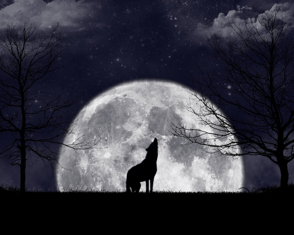 Howling_At_The_Moon_by_zanardo